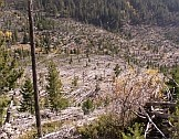 Montana, USA. Trees knocked down by a microburst in 1999. Credits: Rod Benson